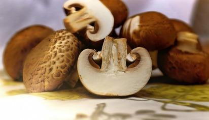 mushrooms-1167181_1280