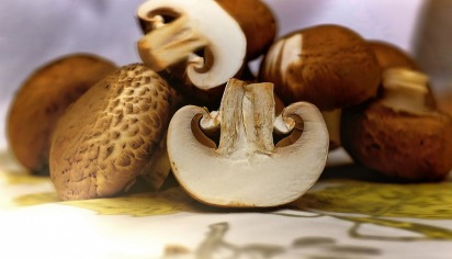 mushrooms-1167181_1280